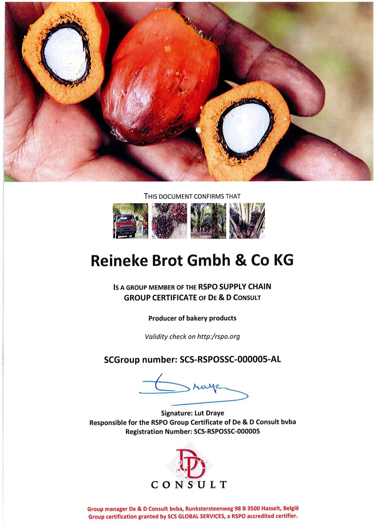 RSPO Supply Chain-1